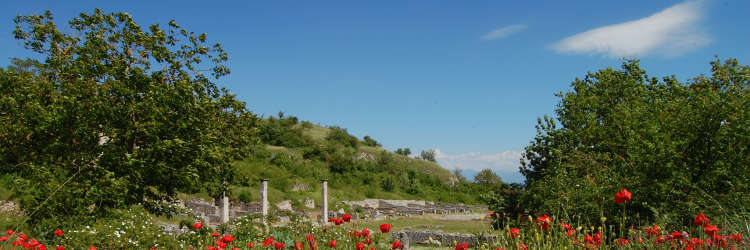 Alba Fucens excavated area and poppies